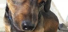 2020 01 30 disparition chien a durningen